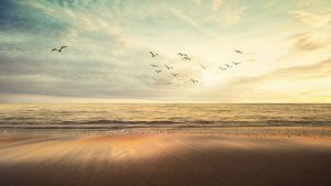 Bird taking its own path, Investment journey, asset management, Setanta asset management